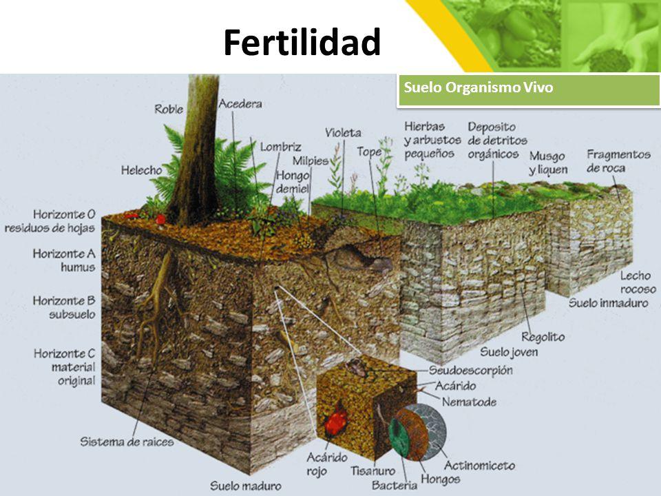 La fertilidad del suelo suelo f rtil - Cual es el mejor suelo para una casa ...